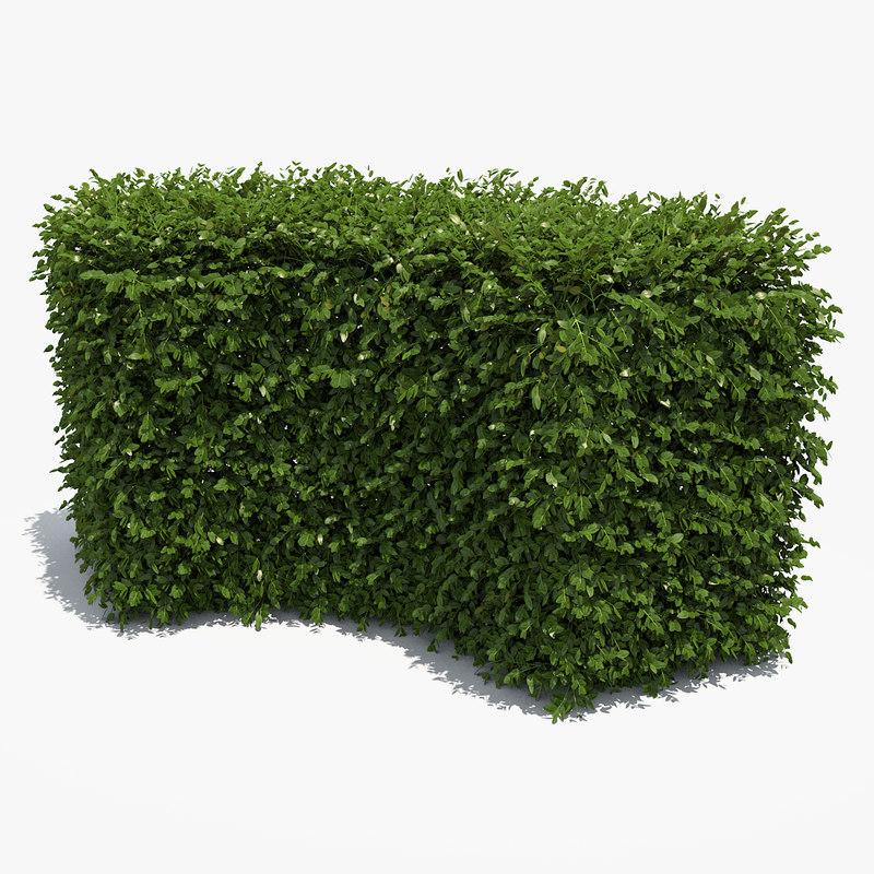 Boxwood Hedge 3D model