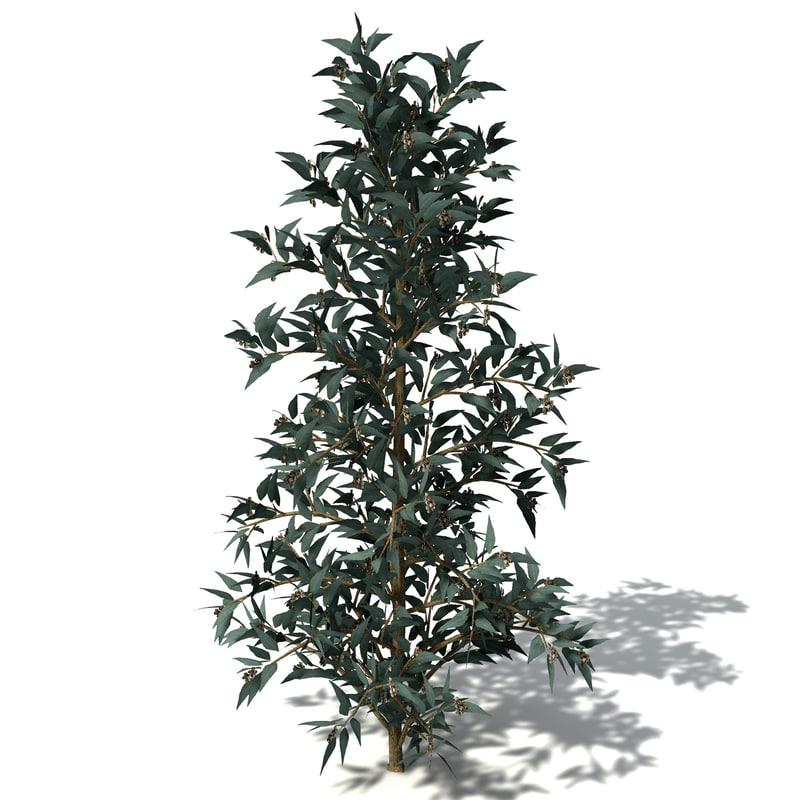 Eucalyptus 3D model