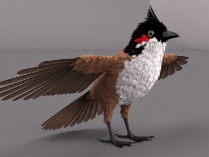 Red Whisker Bird