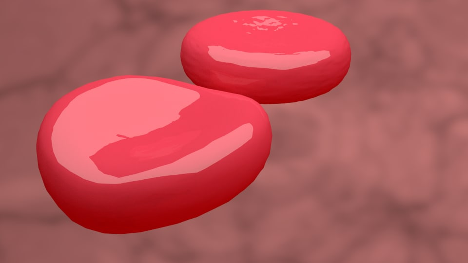 Red blood cell 3D model