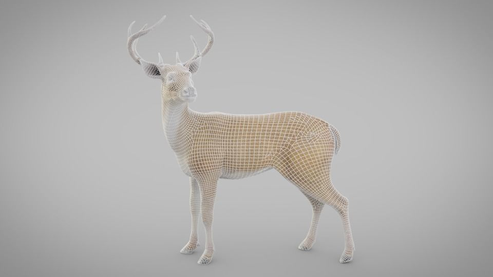 Realistic Deer 3D model