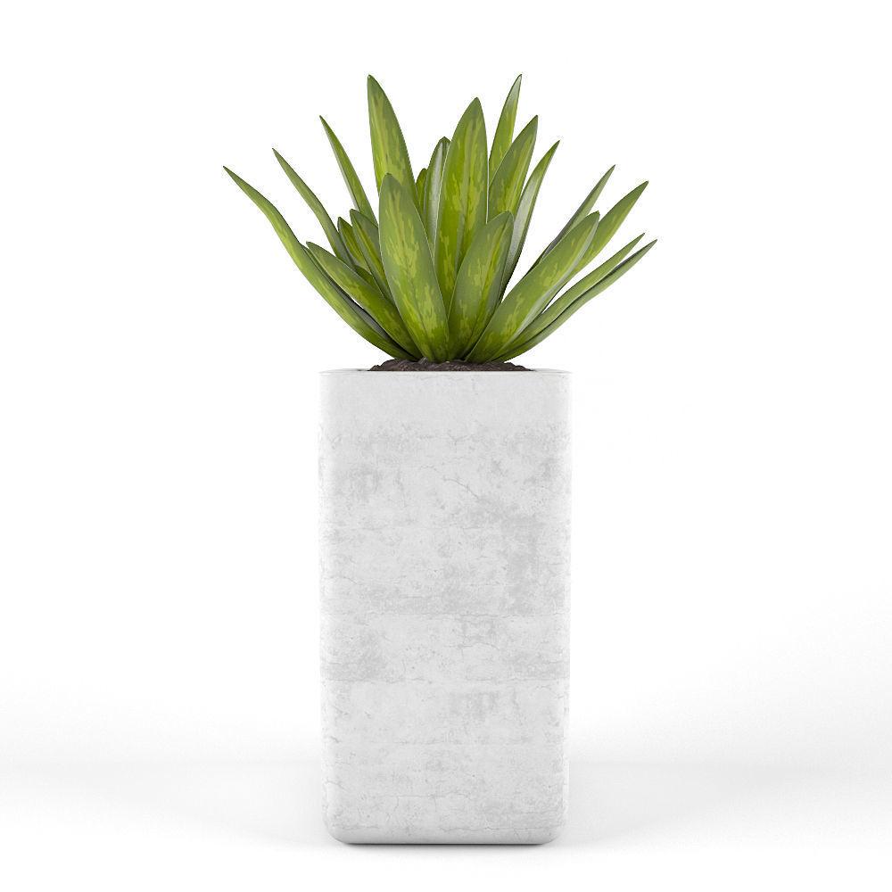 Tropics flowers 3D model