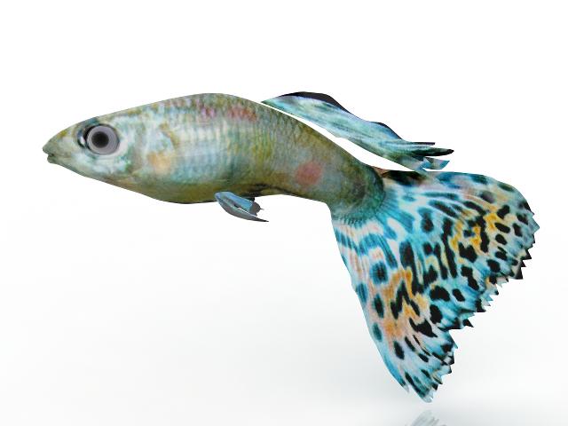 Aquarium fish 3D model