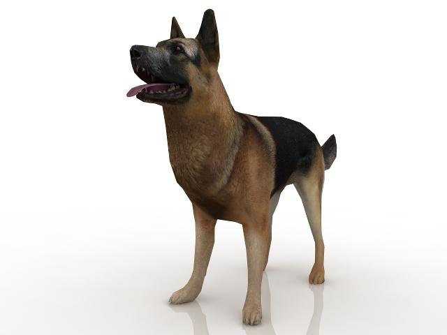Sheepdog 3D model