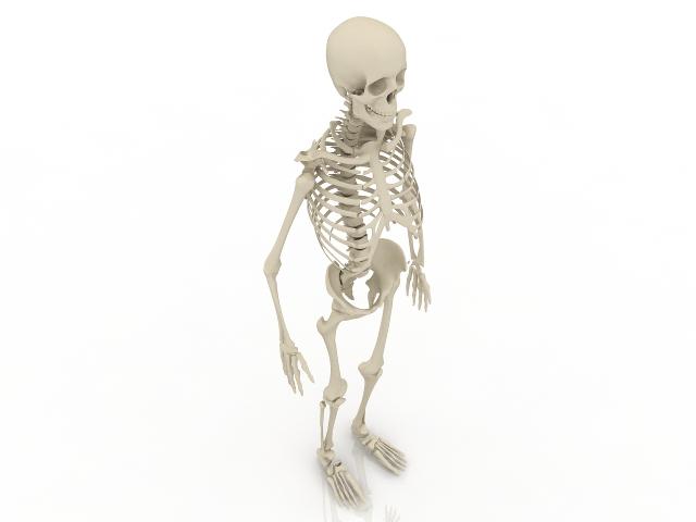 Human skeleton 3D model Download for Free