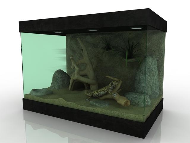 Terrarium with a gecko 3D model