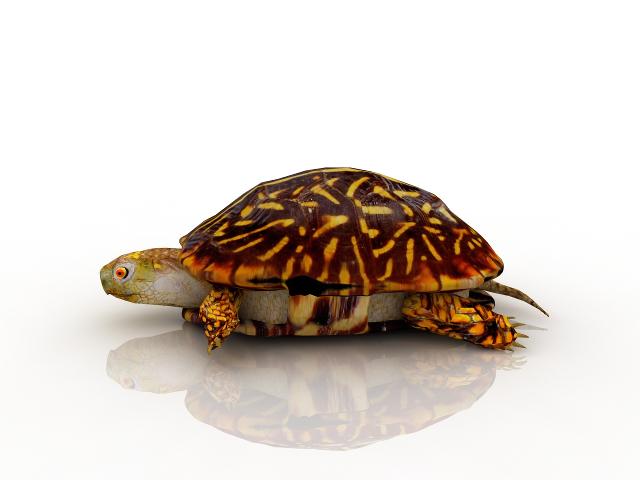 Turtle 3D model