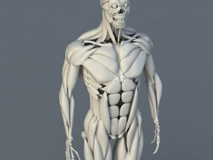 Human Body Bones and Muscles