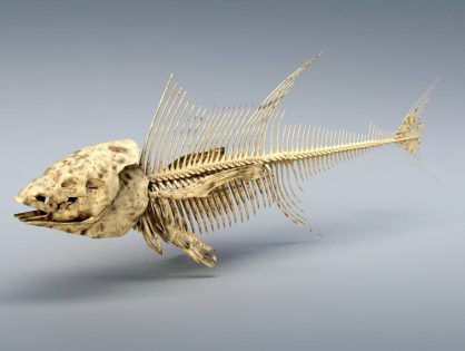Tuna Fish Skeleton