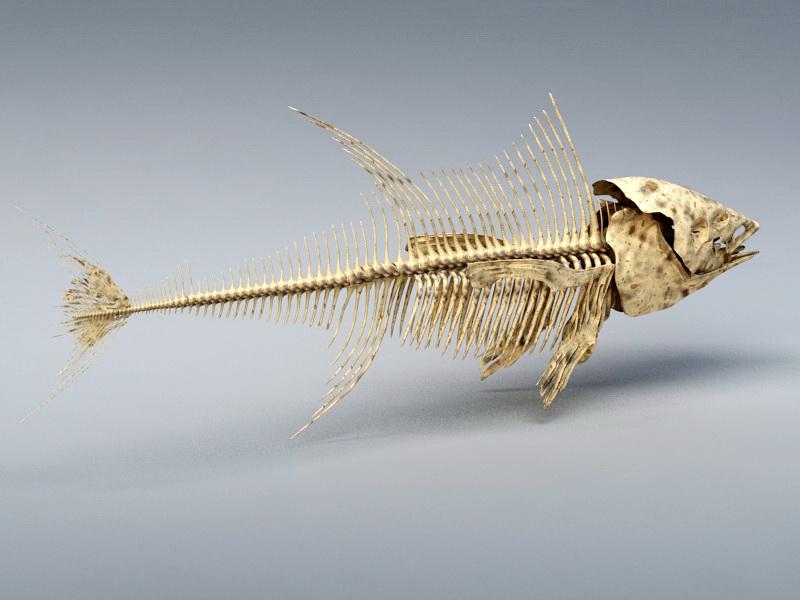 Tuna Fish Skeleton 3D model