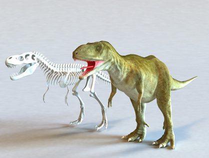 Tyrannosaurus Rex and Skeleton