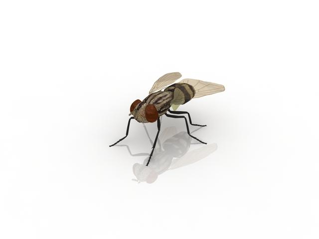 Housefly 3d model