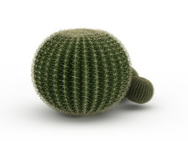 Silver ball cactus 3D model