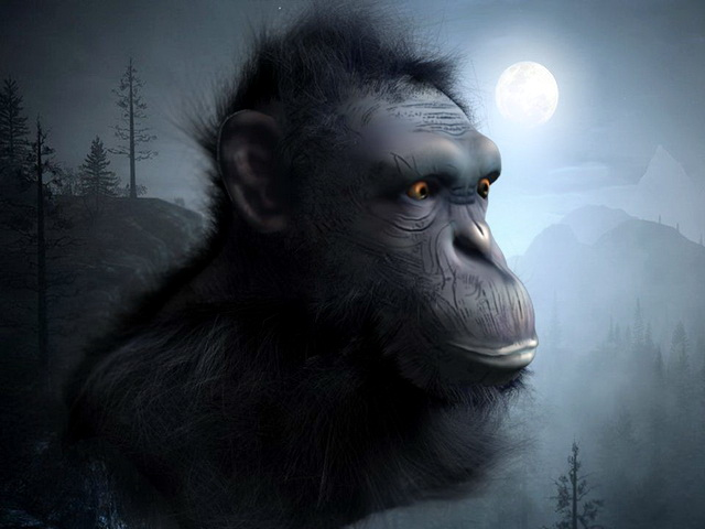 Chimpanzee Head 3D model