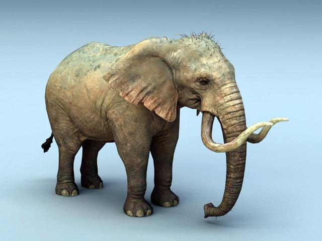 African elephant 3D model