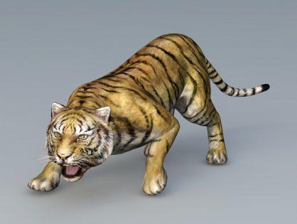 Attack Tiger