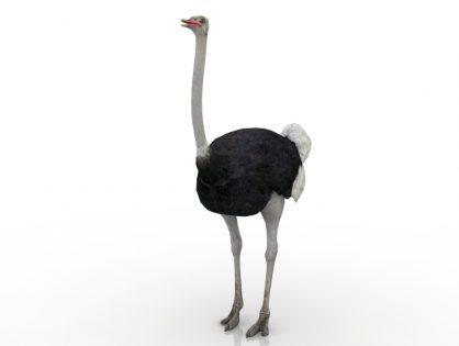 Camel-bird