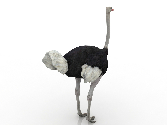 Camel-bird 3D model