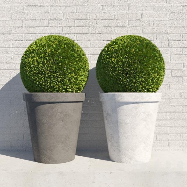 Decorative bush in a pot 3D model