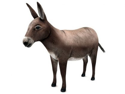 Domestic Donkey 3D model