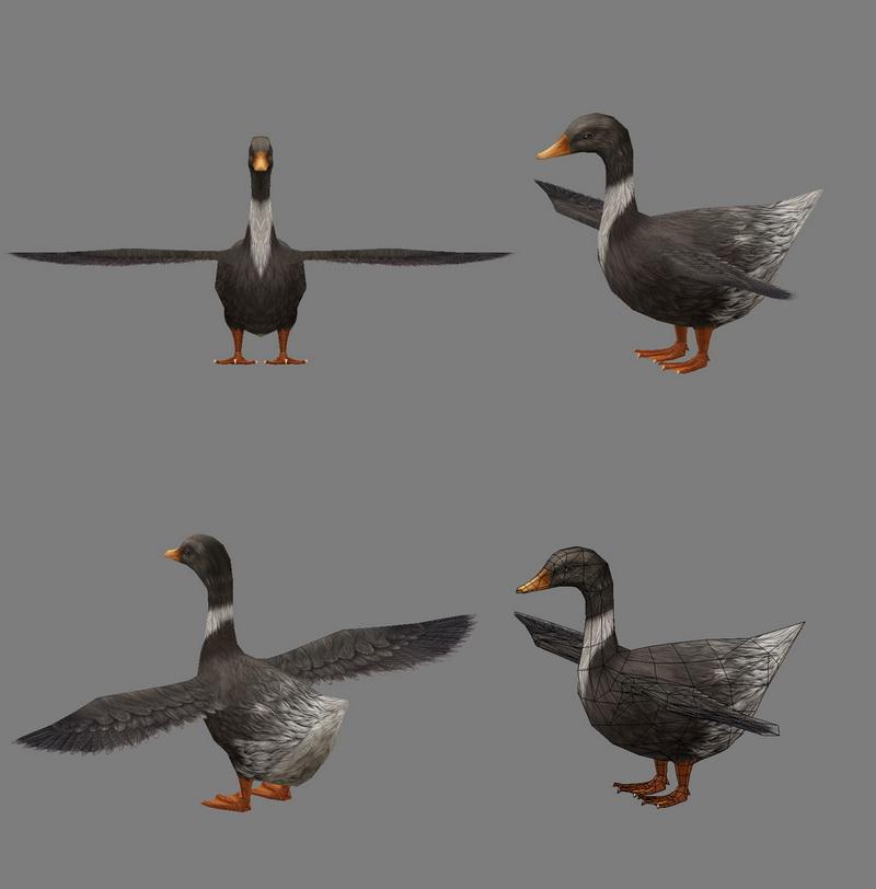 Domestic Duck 3D model