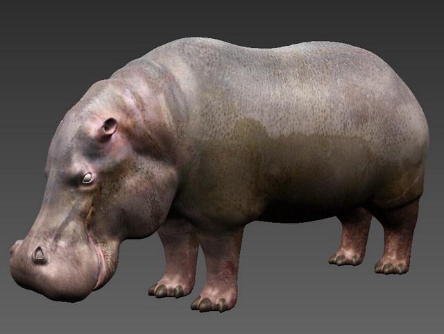 Fat Hippopotamus 3D model