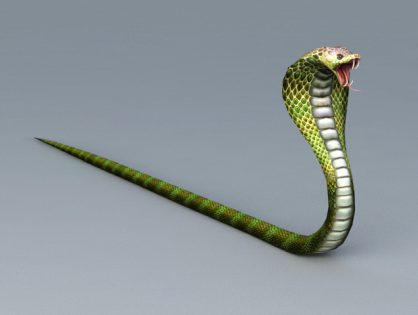 Snake Cobra Attacking