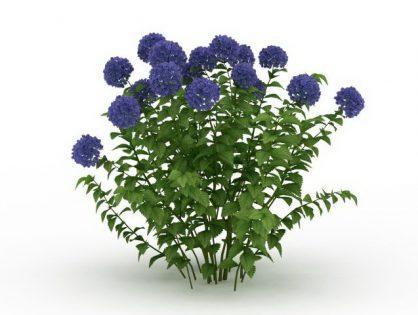 Blue Hydrangea 3D model