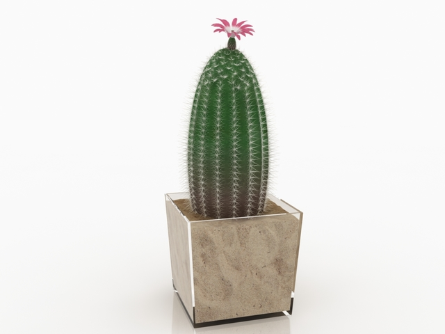Cactus pot 3D model